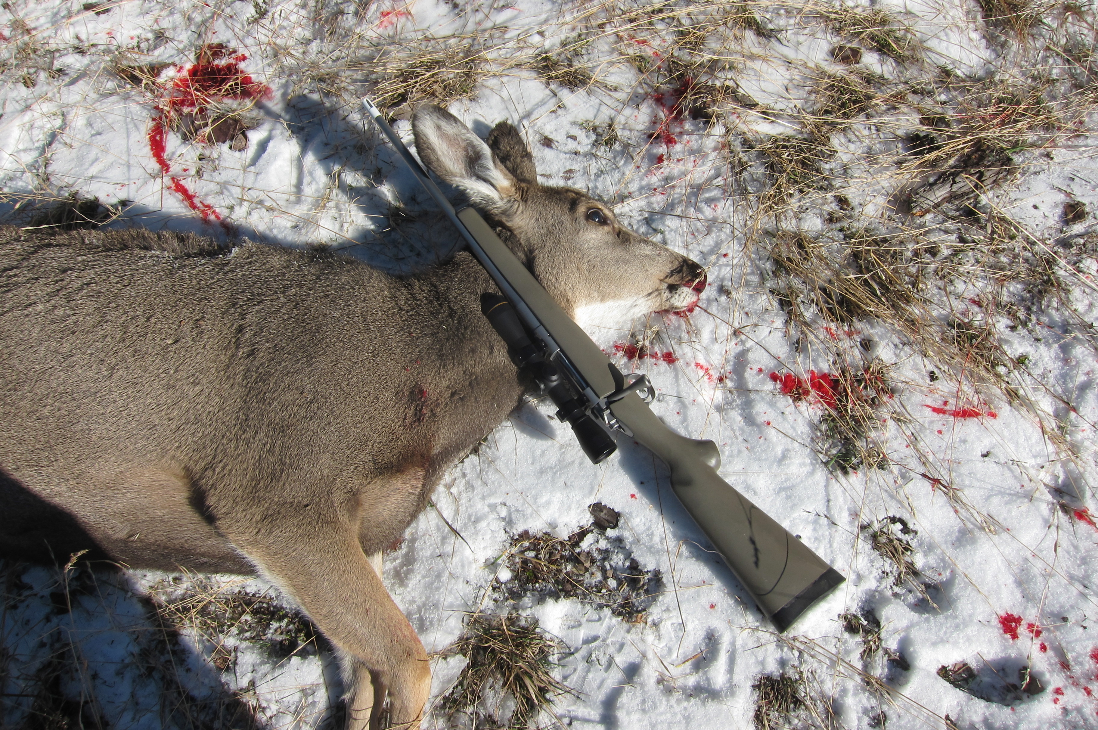 308 solid cam how to run in